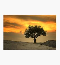 0799 Tree on Rocks  Photographic Print