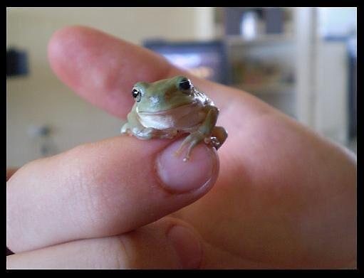 Froggie -1- by elizabethrose05