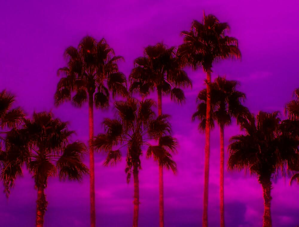 Palm Tree Heaven by Kenneth Krolikowski