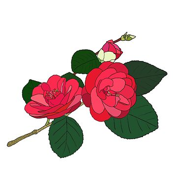 Camellia  by m-lapino