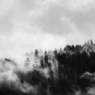 Black & White Misty Forest by PhotoStore