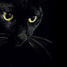 black cat portrait by JudyBJ