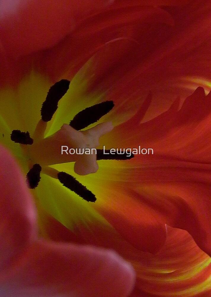 Tulip by Rowan  Lewgalon