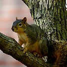I'm Just A Squirrel in the World by Alexander Greenwood