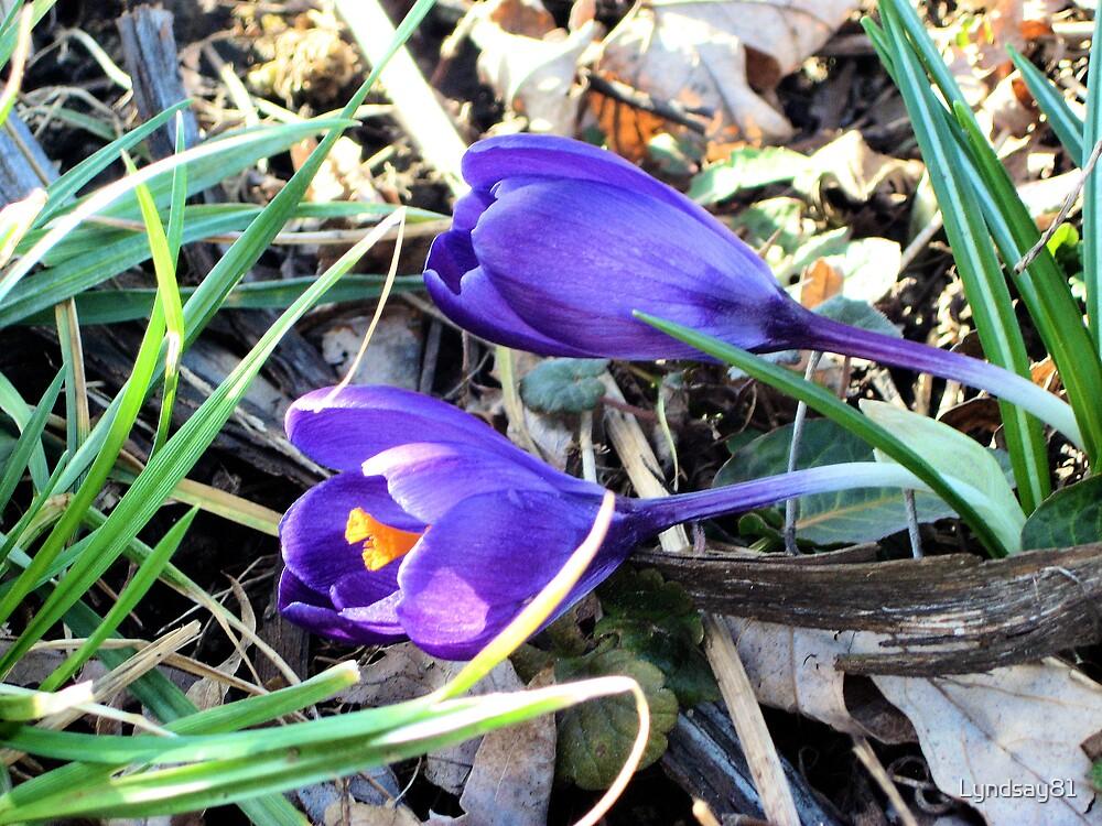 Purple Flowers in Bloom  by Lyndsay81