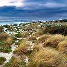 Windswept by Joel McDonald