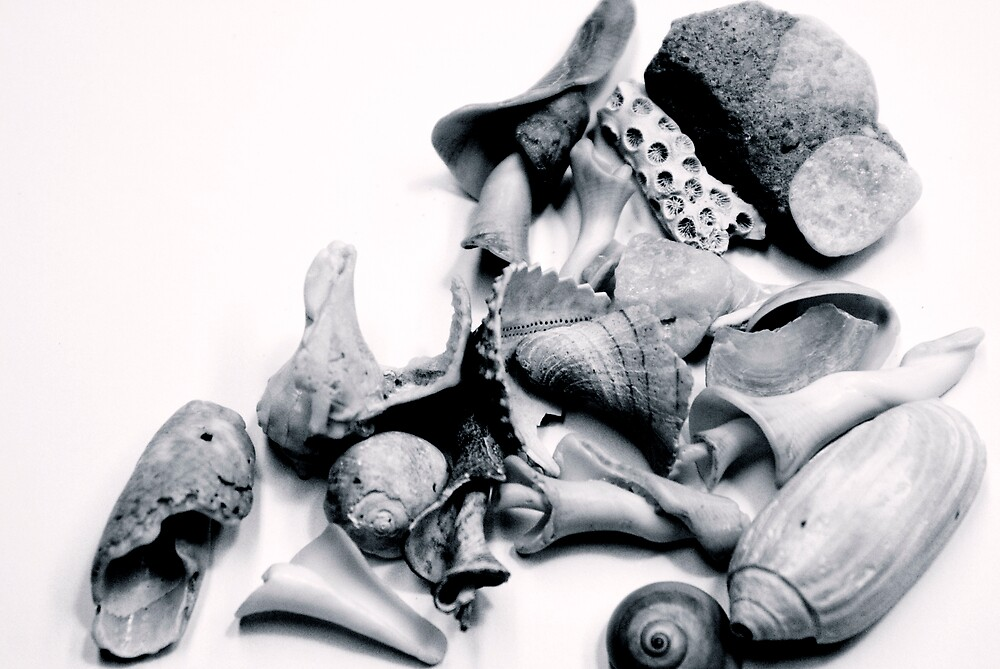 Shells #1 by Rod  Adams