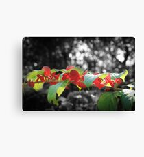 Red & Green are Not Just for Christmas Canvas Print