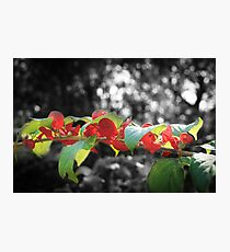 Red & Green are Not Just for Christmas Photographic Print