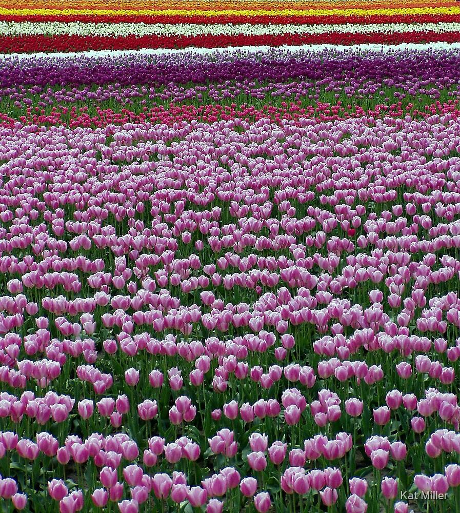 Fields of Purple by Kat Miller