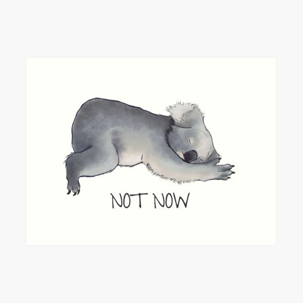 Koala Sketch - Not Now - Lazy animal Art Print