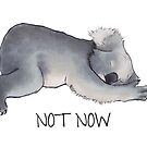 Koala Sketch - Not Now - Lazy animal by Beatrizxe