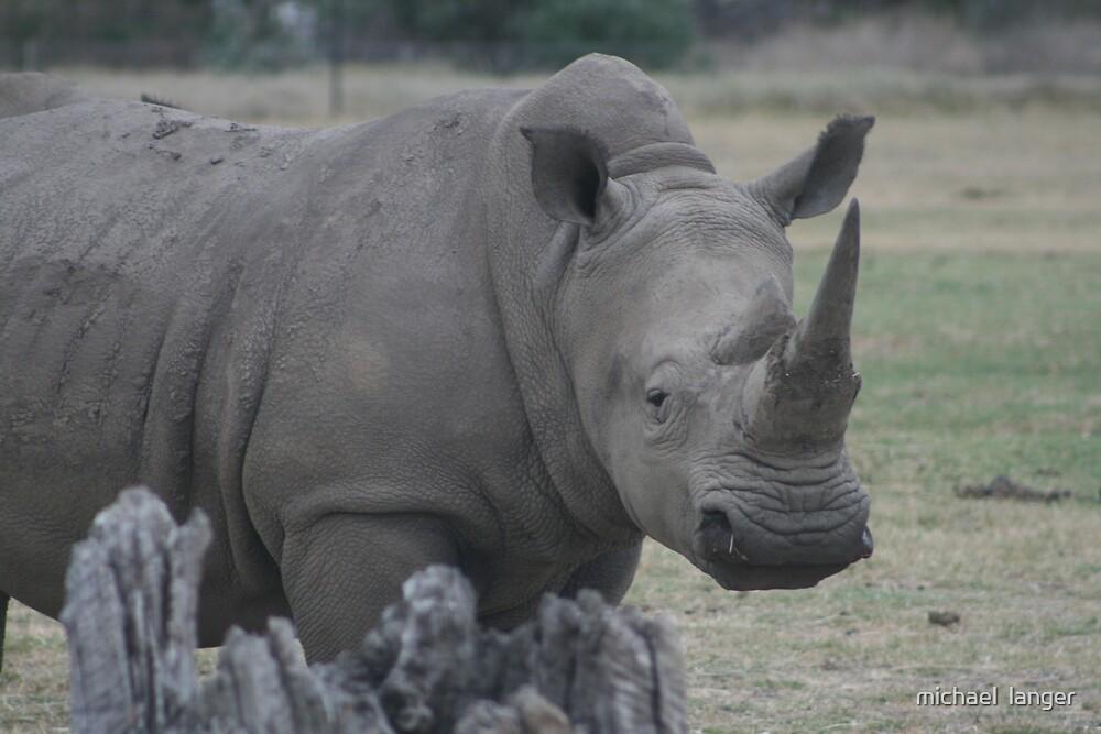 horny rhino by michael  langer