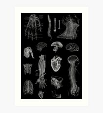 Vintage Anatomy Print  Art Print