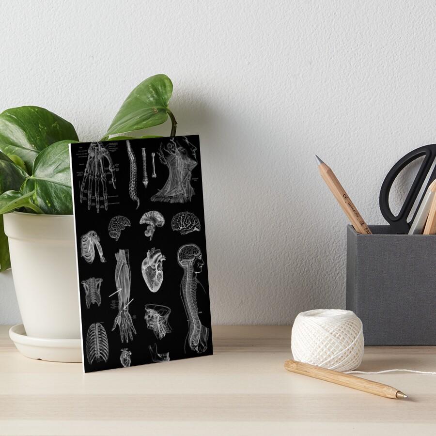 Vintage Anatomy Print  Art Board Print