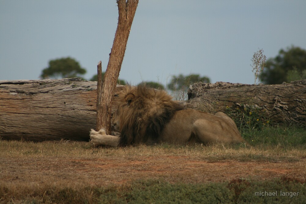 scratching post by michael  langer