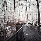 Millsap Canopy Bridge, Garvan Woodland Gardens - Infrared by mal-photography