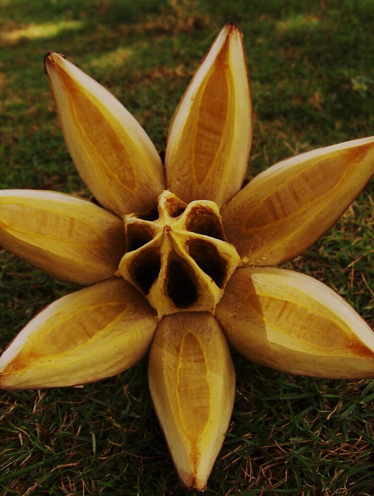tropical seed pod by Diana Forgione