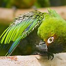 Green Parakeet by Dominika Aniola