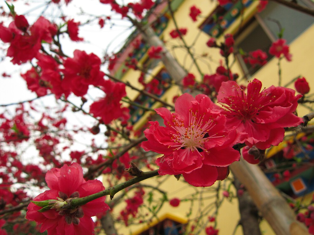 springtime in Nepal by rani