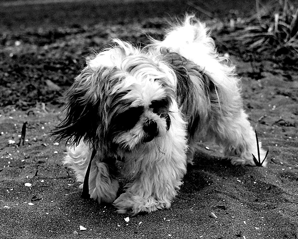 Beach Puppy (B&W) by carolssecrets