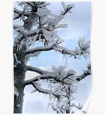 Freezing Tree Poster