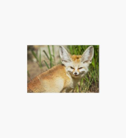 Fennec Fox Art Board