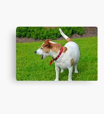 Jack Russell Painting Canvas Print