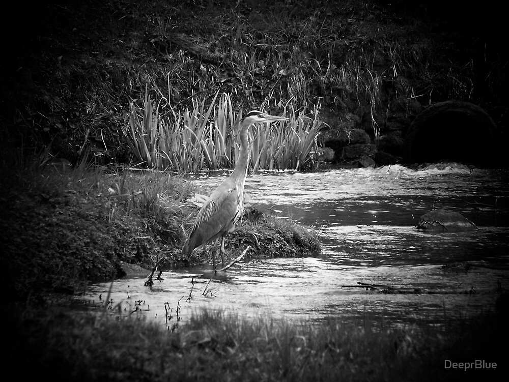 The Great Blue Heron in B&W 2 by DeeprBlue