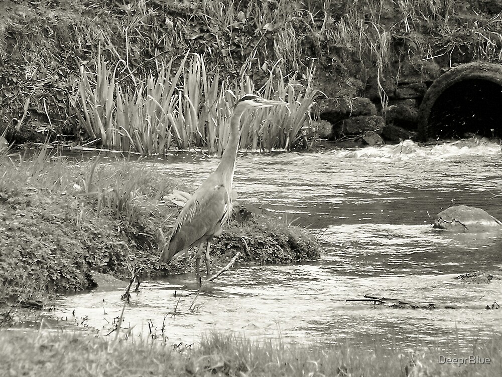 The Great Blue Heron in B&W by DeeprBlue