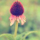 Beauty Fading ~ Flower. by Karen  Betts