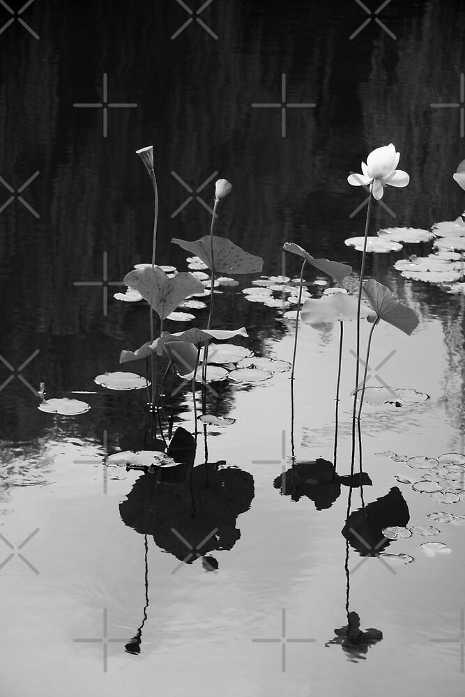Sacred Balance by Varinia   - Globalphotos