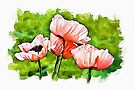 Pink Poppies - watercolour by PhotosByHealy