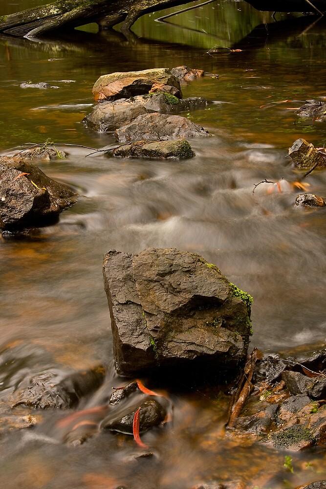 Rock Pool by Dave Preston