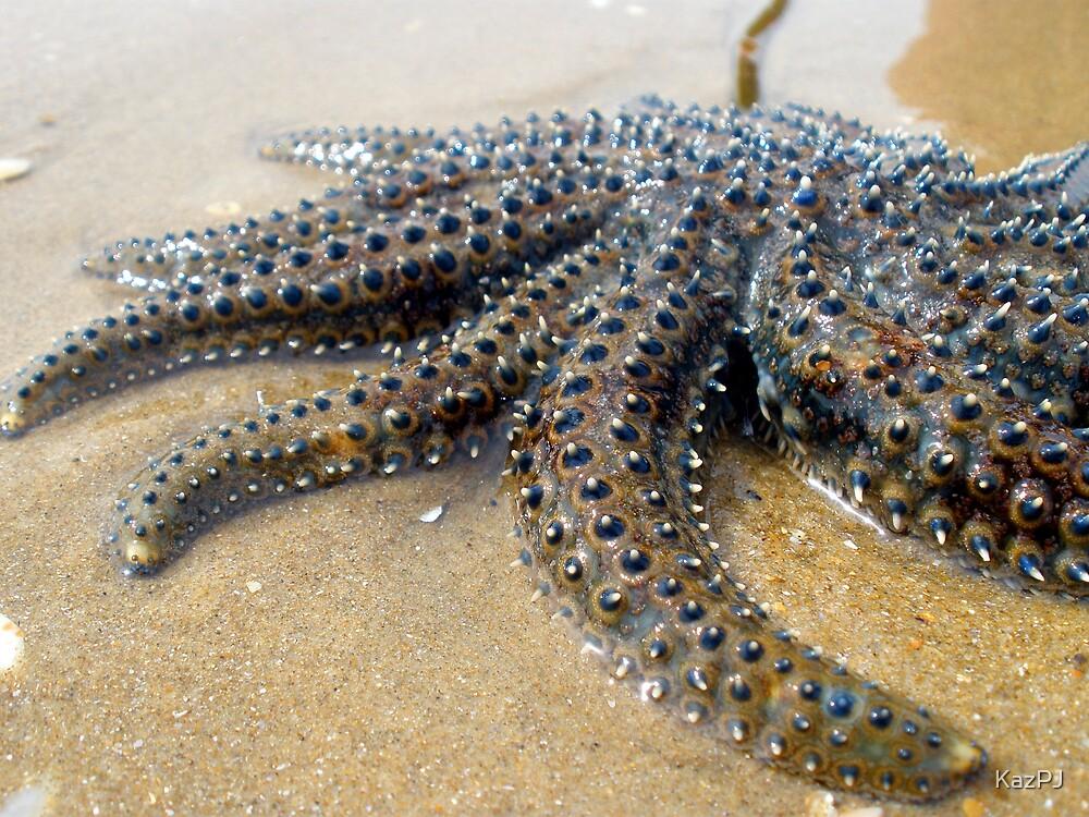 Starfish by KazPJ