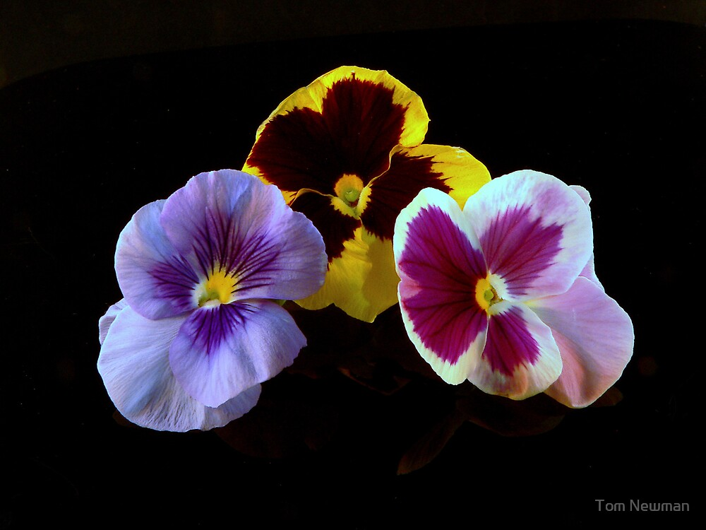 A Pansy Collage II by Tom Newman