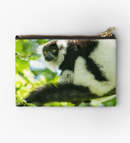 Black-and-white Ruffed Lemur Studio Pouch