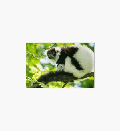 Black-and-white Ruffed Lemur Art Board