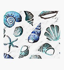 South pacific sea shells - white marble Photographic Print