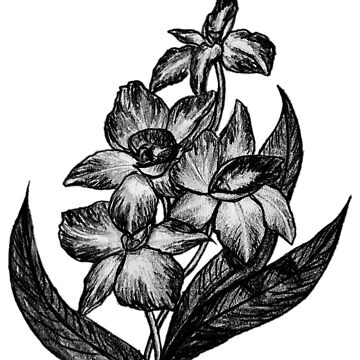 Black and White Flowers Sketch by maryhorohoe