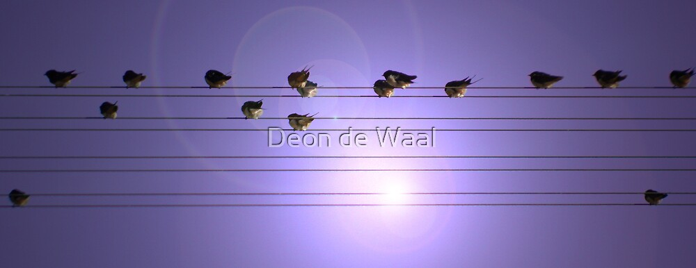 """For the """"Byrds"""" by Deon de Waal"""