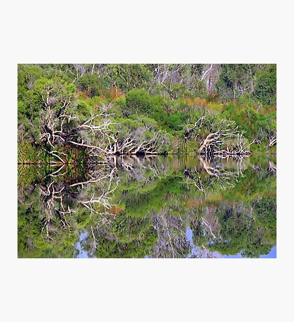 Forest Reflection 1 Photographic Print