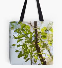 Australian Eucalyptus Leaves in the Sunlight Tote Bag