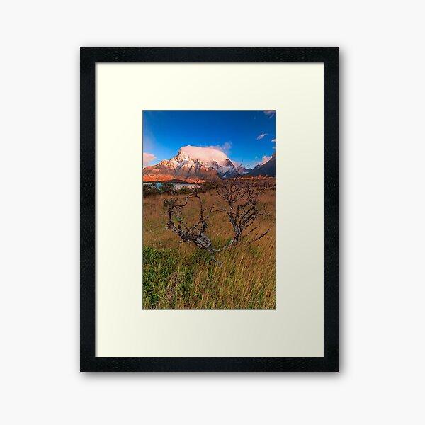 Burned tree Framed Art Print