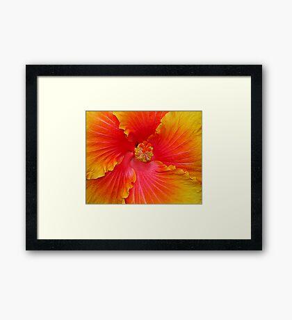 'Huephoria' Framed Print