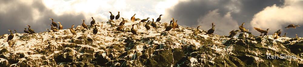 Cormorants by Ken Simm