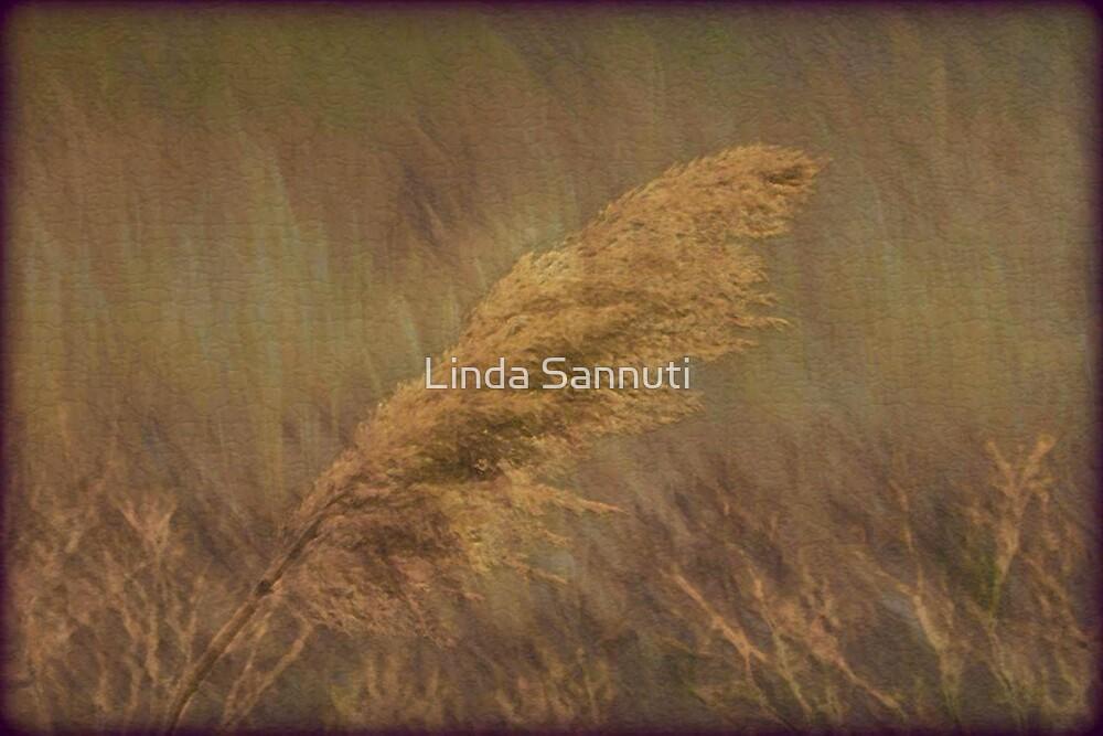 brushtones by Linda Sannuti