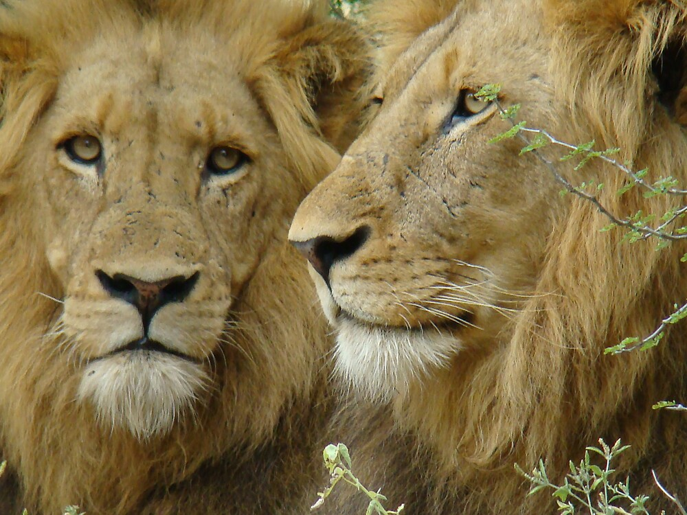 brothers by bennobasson