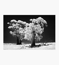 038 Trees in IR Photographic Print