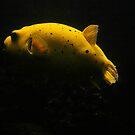 Yellow Fish by kittymomo